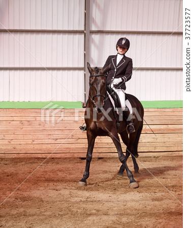 Jockey rides horse in arena 37723577