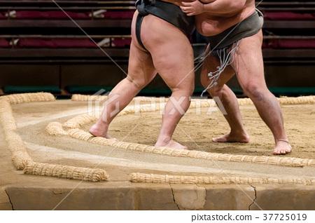 相撲摔跤比賽 37725019