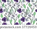 紫色 紫 紫羅蘭 37726450
