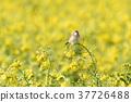bird, birds, fowls 37726488