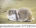 토끼, 동물, 귀엽다 37726554