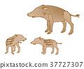 Wild boar parent and child Uri bo 37727307