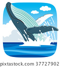 whale blue water 37727902