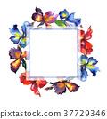 floral, iris, watercolor 37729346