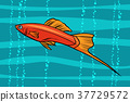 ปลา,อควาเรียม,,พิพิธภัณฑ์สัตว์น้ำ 37729572