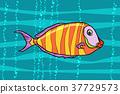 fish animal cichlid 37729573