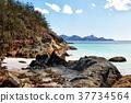 in  australia  the  beach  island the tree and ks 37734564