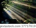 meotodaki falls, water fall, waterfall 37737619