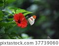 flower flowers butterfly 37739060
