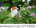 flower flowers butterfly 37739062