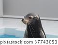물범, 바다표범, 해양 생물 37743053