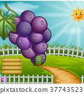 Grape house in garden 37743523