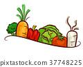 Vegetables Design Illustration 37748225