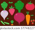 Garden Fruits Vegetables Background Illustration 37748227