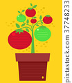 Tomato Design Background Illustration 37748233
