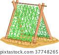 Vines Support Illustration 37748265