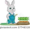 토끼, 새끼토끼, 당근 37748318