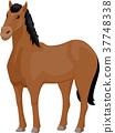 Horse Illustration 37748338