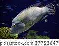 어류, 물고기, 생선 37753847