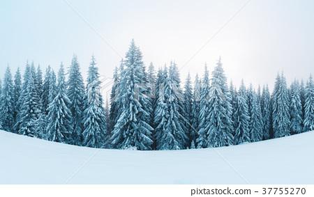 Fantastic winter landscape 37755270
