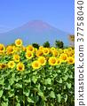 후지산, 하나노미야코 공원, 꽃밭 37758040