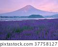 風景 花莖 景觀 37758127