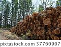 낸 삼나무 통나무 37760907