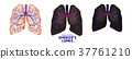 Smoker's lungs set in low poly. Healthy lungs  37761210
