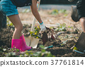vegetable field 37761814