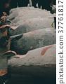 fish market 37761817
