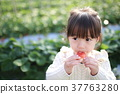 딸기 사냥 (아이 유아 여자 딸기 딸기 딸기 과일 과일 레저 비닐 하우스 디저트) 37763280