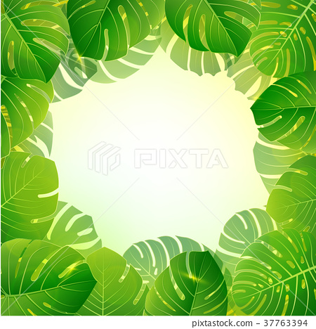 Bright natuer background with jungle plants.  37763394