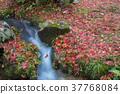 brook, creek, maple 37768084