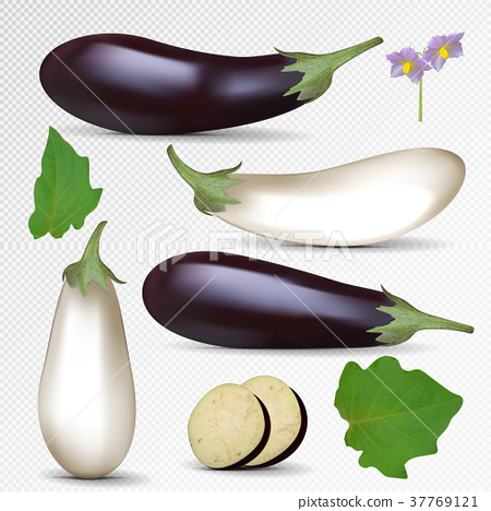 Vector fresh purple and white eggplant isolated on 37769121