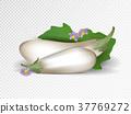 eggplant white isolated 37769272