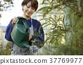 一个女人在做浇水 37769977