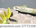 먹이를 찾아 뱀 2 37772398