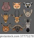 Head of wild animals set, portrait of hippo, lynx 37773278