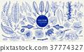 Vector botany collection. Retro hand drawn 37774327