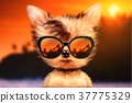 Dog in sunglasses stand in front travel background 37775329