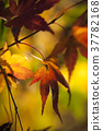 푸른, 잎, 배경 37782168