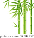 Realistic 3d Detailed Bamboo Shoots. Vector 37782557