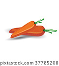 Carrot vegetable isolated on white background. 37785208