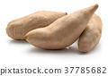 Fresh raw sweet potato isolated on white 37785682