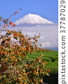 富士山 岩本山 秋天 37787029