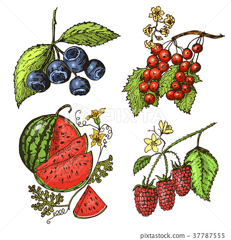 Set berries. raspberry, blueberry, sea buckthorn 37787555