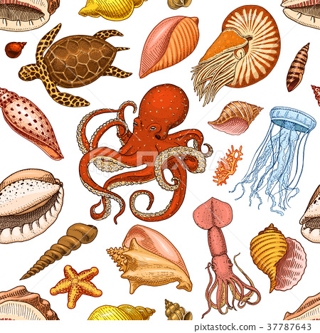 seamless pattern shells, seaweed and octopus and 37787643