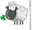 irish shepp cartoon on white background 37788467