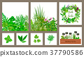 Wooden crate of farm fresh cooking herbs in wooden 37790586
