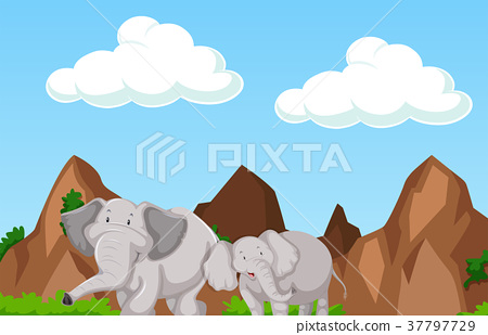Scene with two elephants in the mountain 37797729